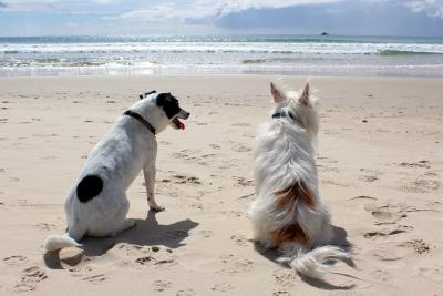 In Vacanza con il proprio cane