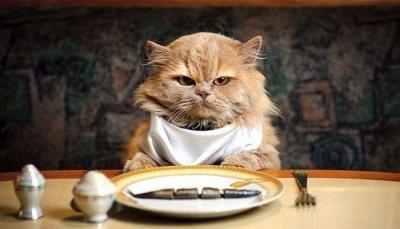Come cambiare alimentazione al proprio gatto