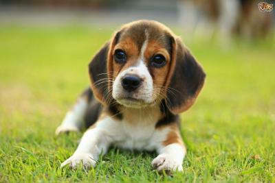 Cani di piccola taglia