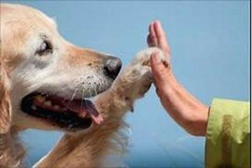 Pet Therapy & Covid19