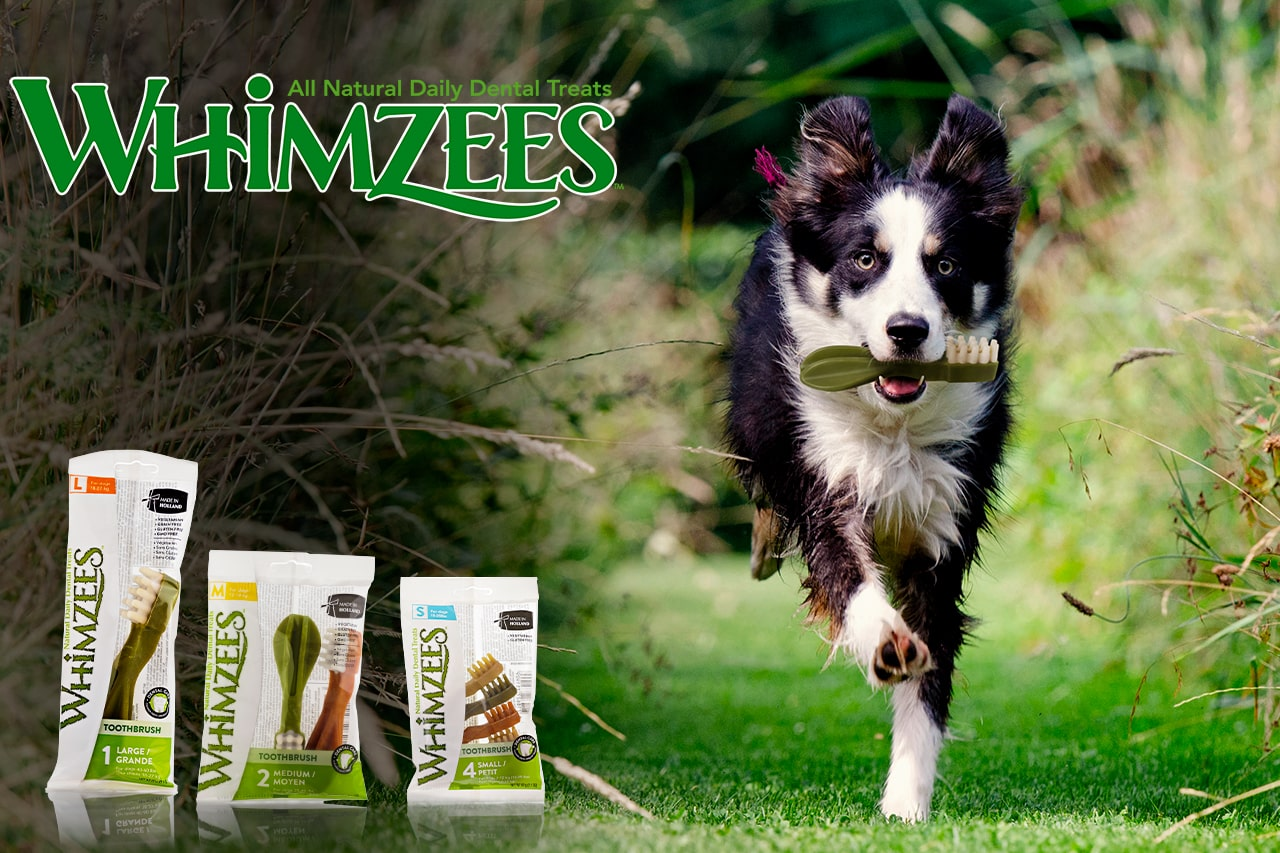 Whimzess - Snack dentale per cani - 100% naturale & 100% vegetale